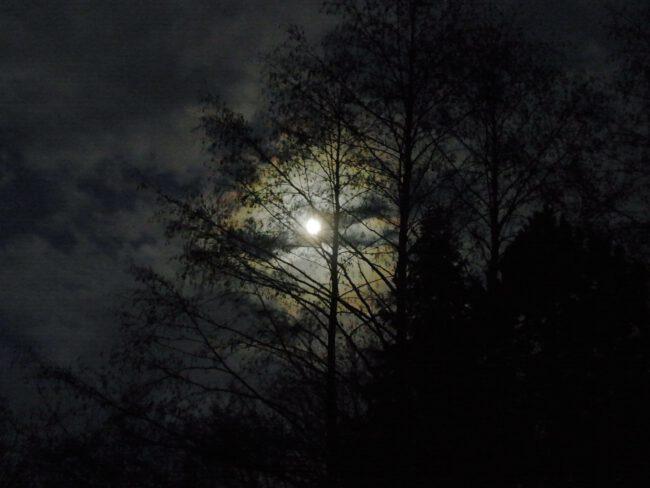 Waldbaden – Wanderung im Mondschein Foto